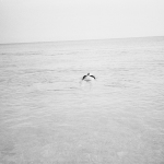 Anna Faragona_Bluebird_03