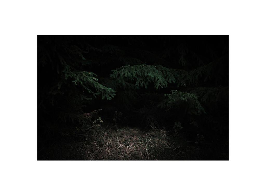 wood_14 06